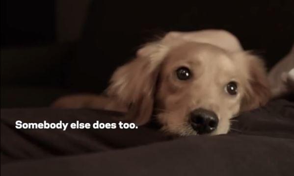 Anchor Dog