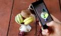 Food Blogger Survey