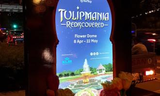 Tulipmania Creative 6 Sheet Night